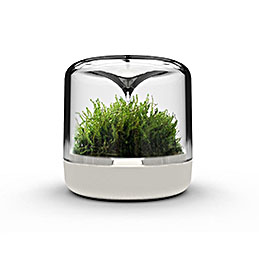 mossarium sanctuary s cream with moss 1000
