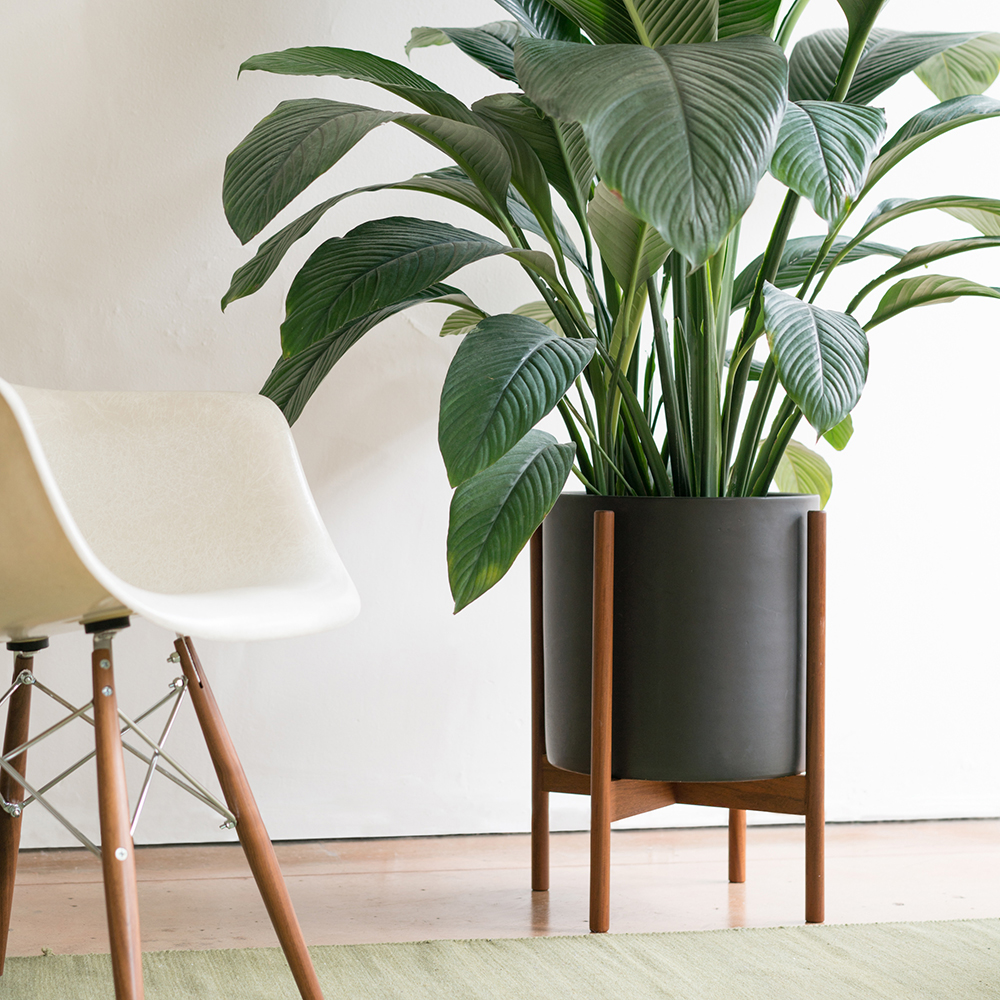 modernica planter black extra large 1000
